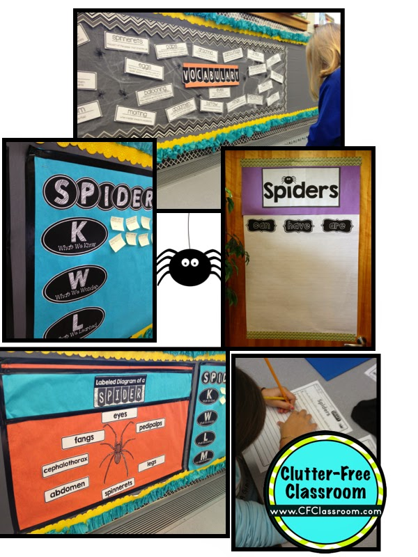 spider wall displays and activities in an elementary classroom