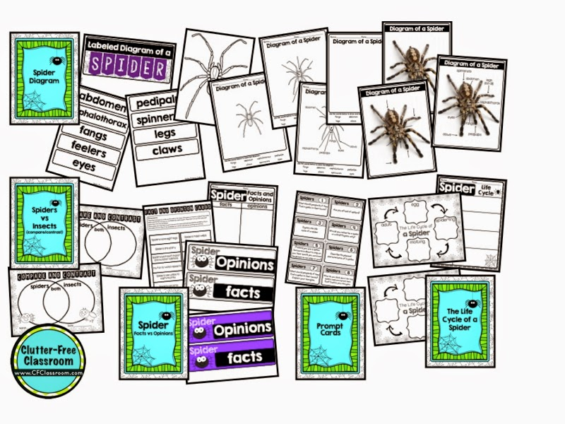 spider activities for elementary students
