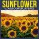 sunflower classroom decor ideas