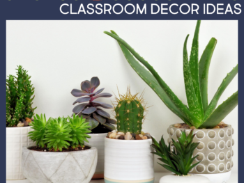cactus or succulents as classroom decor