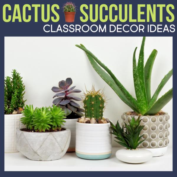 cactus or succulents as classroom decor