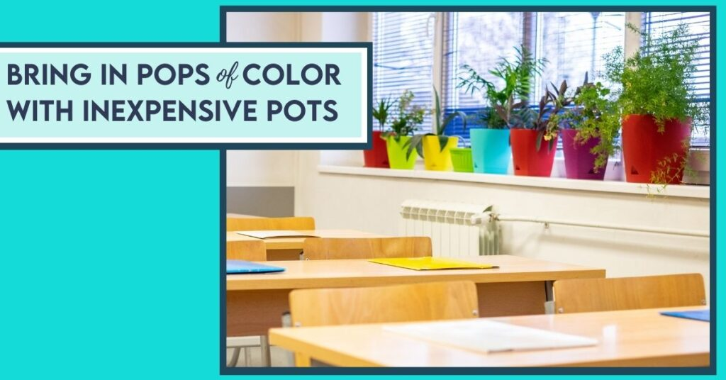 colorful potted plants on classroom shelf